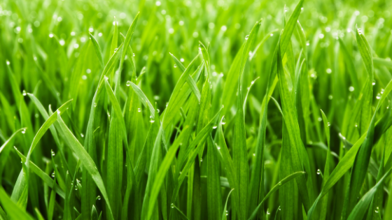 The Grass Is Still Growing | The Planning Center